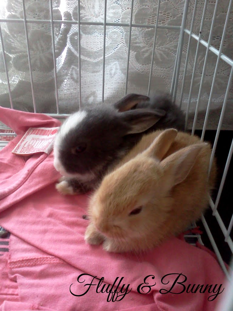Fluffy And Bunny: Chapter 1: Bunny Boy