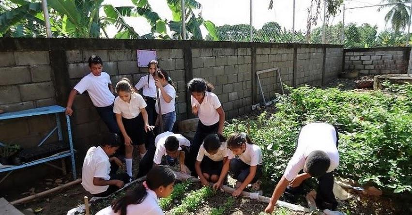 Huertos escolares mejoran la educación y nutrición infantil