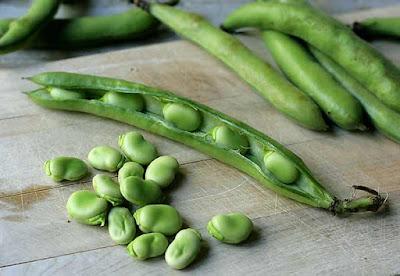 الفول الأخضر