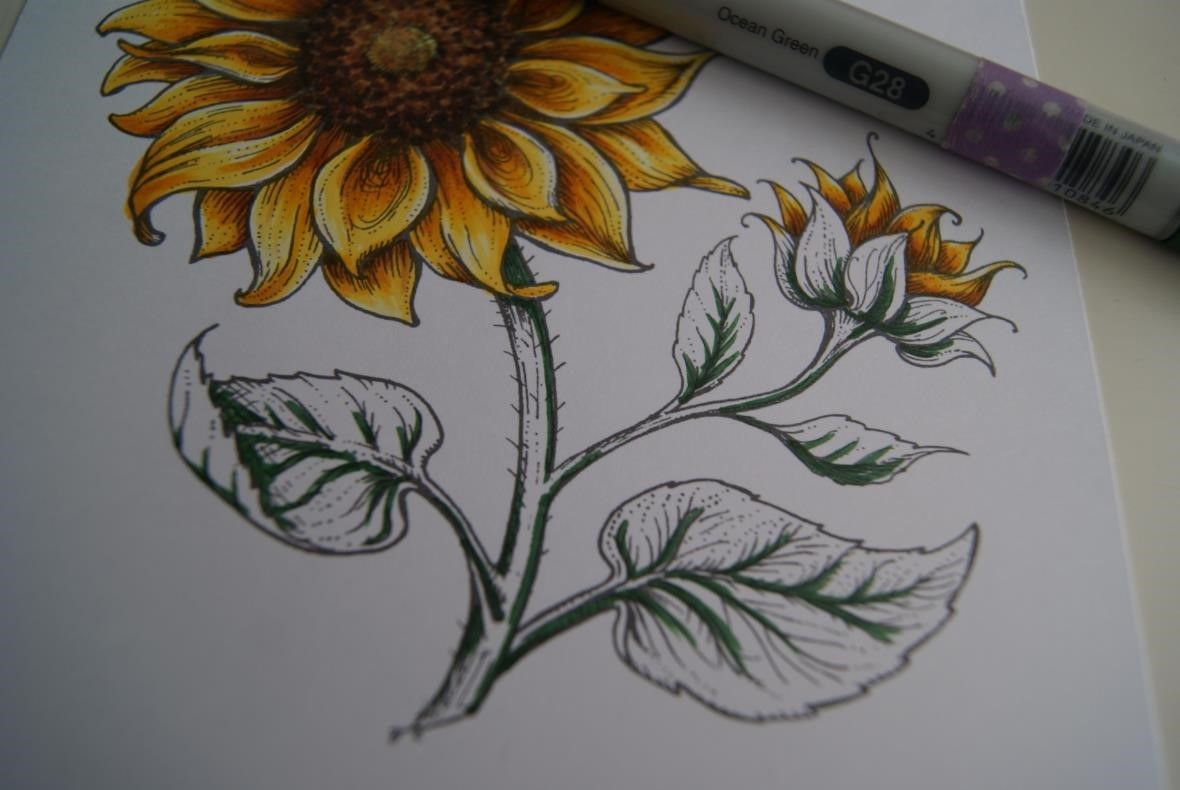 Copic Marker España Tutorial Girasoles