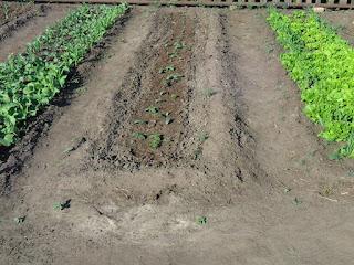В центре огурцы, слева редиска с кукурузой, справа салат с кукурузой