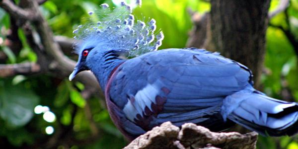 Papouasie, Nouvelle Guinée