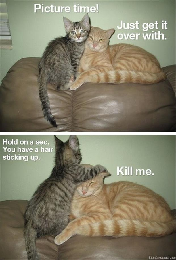 30 Funny animal captions - part 11 (30 pics) | Amazing ...