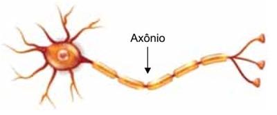 Axônio