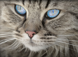 Cats happened to be the most despised animal in Nigeria, they are not in any way appreciated as pet or food (but some people eats cat though).