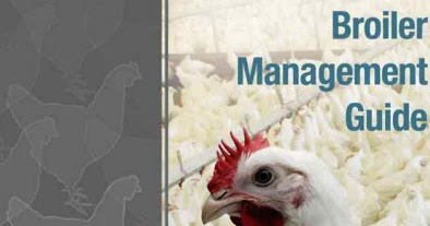 Cobb Broiler Management Guide   Veterinary Info