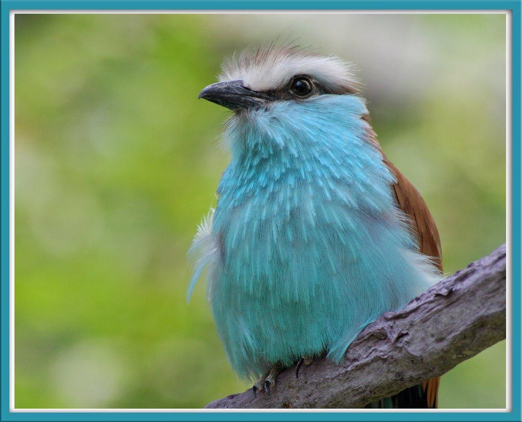 Animals World Latest Videos Of Animal Missouri State Bird