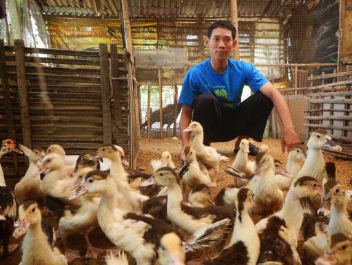 Cara Mendapatkan Uang untuk Lebaran dengan Ternak Mentok Musiman