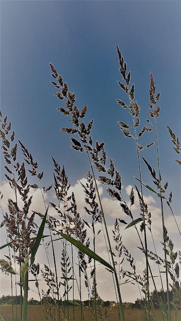 alergia na trawy