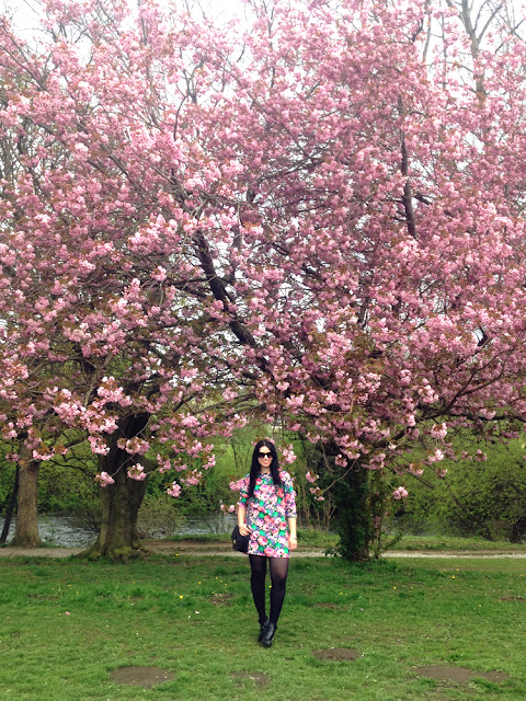 Beautiful cherry blossom in London, England - lifestyle blog