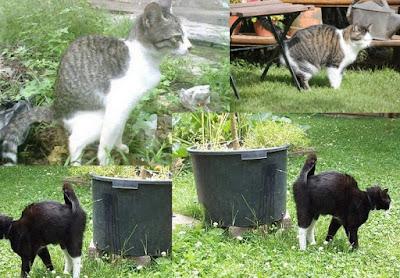 kucing kencing sembarangan, kucing liar kencing, penyebab kucing kencing sembarangan, kucing pipis sembarangan, penyebab kucing pipis di sembarang tempat
