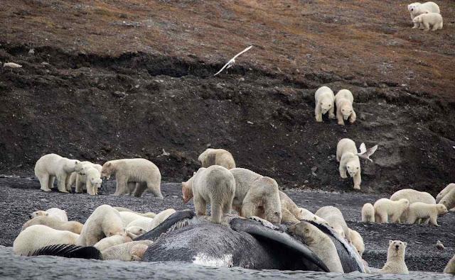 Avanço dos ursos preocupa e crianças não podem ir tranquilas à escola