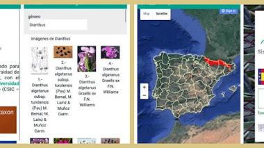 Anthos en el móvil: conocer la flora silvestre española en el medio natural