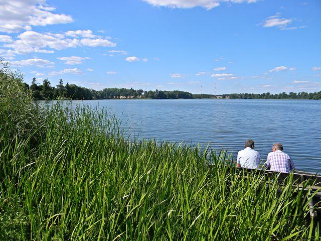 jezioro, pszczewski, Pszczew, szuwary