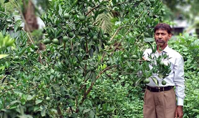 Professor Shamsul Alam, successful teacher of 78 species of fruit, was born in Ghatail