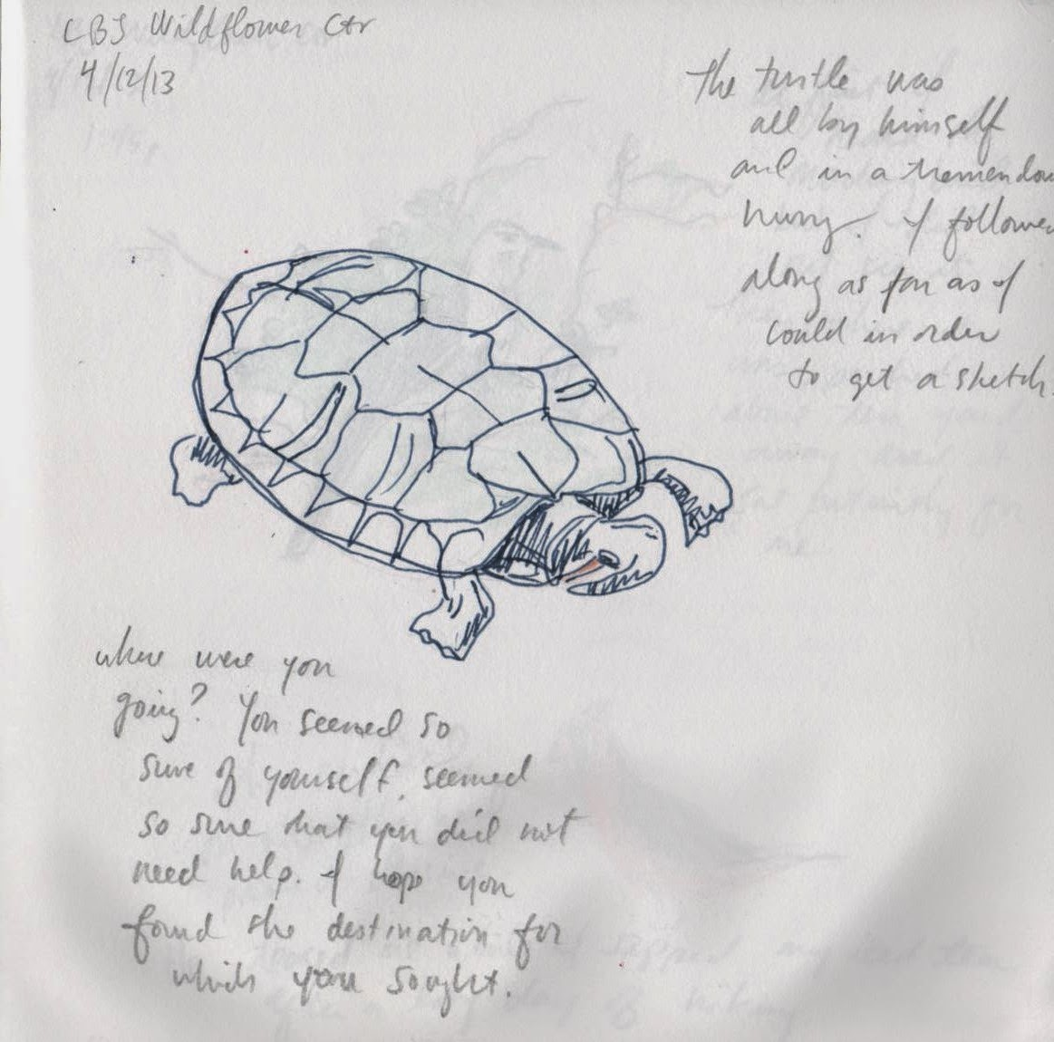 sketch of a turtle by David Borden