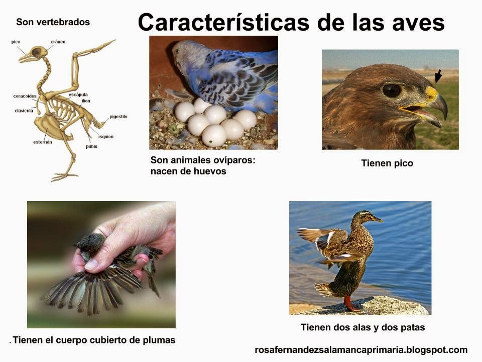 Maestra de Primaria: Los mamíferos y las aves. 2º de Primaria