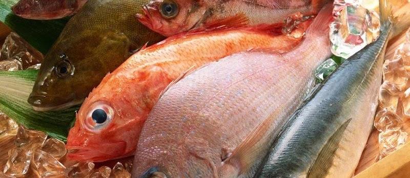 Manfaat Ikan Konsumsi untuk Kesehatan Tubuh Kita