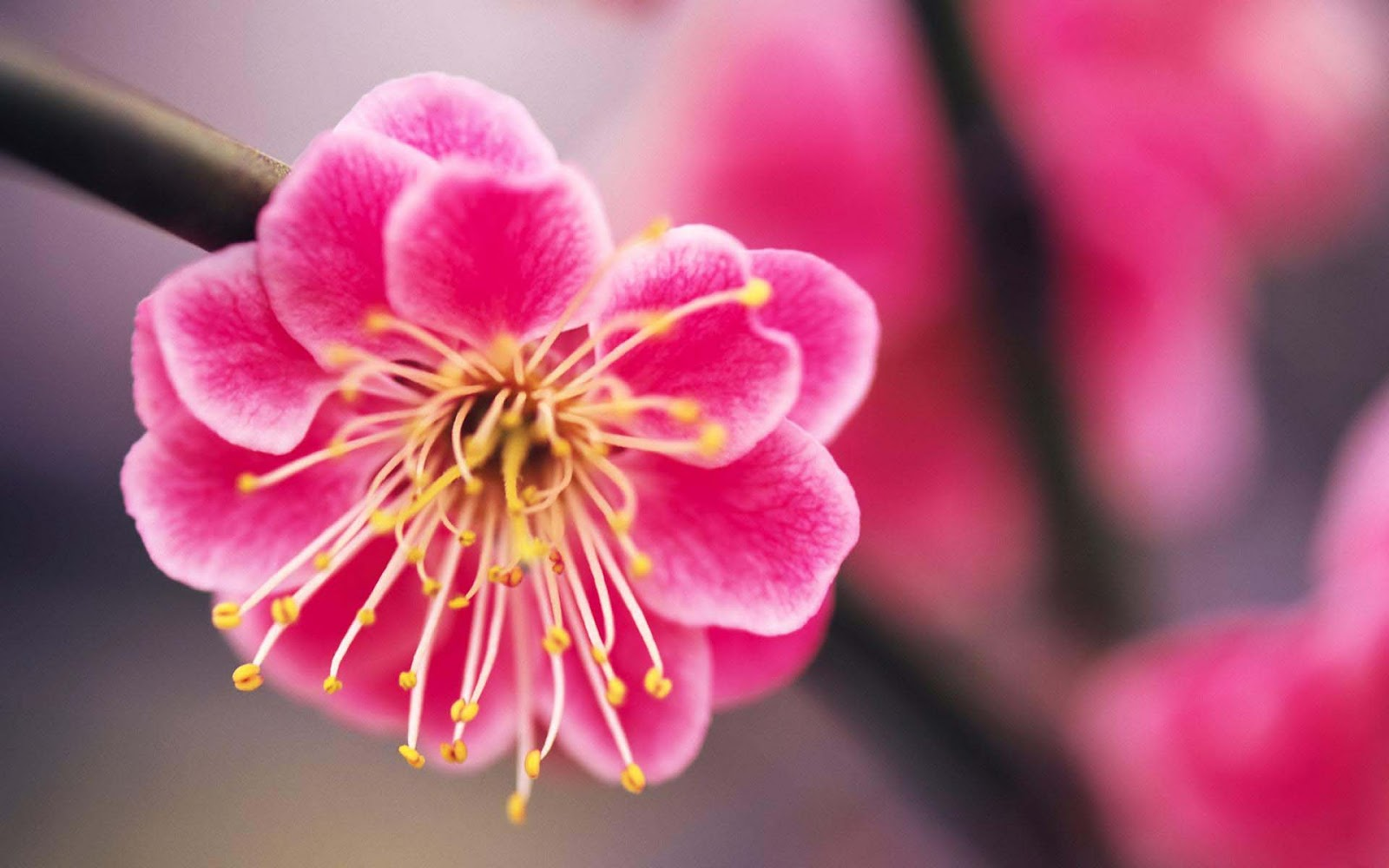 Blooming Flowers Images With High resolution ~ Allfreshwallpaper