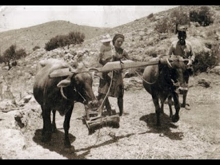 Το παραδοσιακό αλώνισμα στην Κρήτη βίντεο εποχής