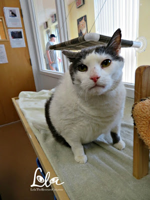 Pet Animal Welfare Society|PAWS CT