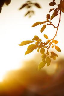 sun Photo by Brandon Green on Unsplash