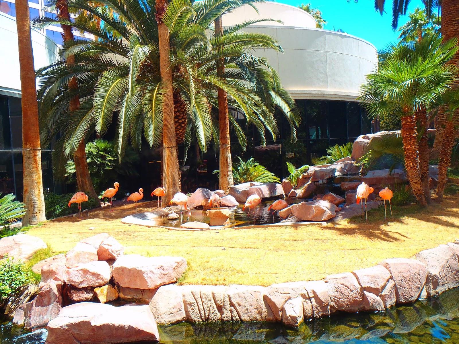 flamingos in las vegas