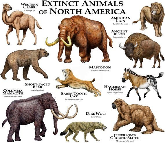 Animais Extintos da America do Norte