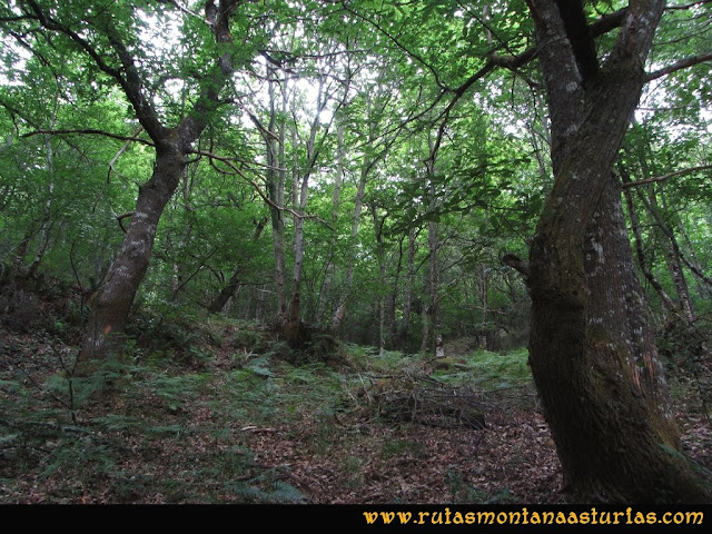 Ruta Bosques de Moal: Bosque
