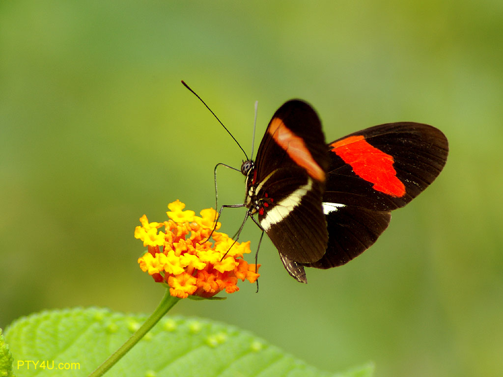 Butterfly - photo#34