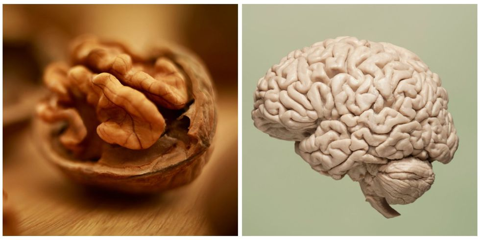 Walnut, Brain