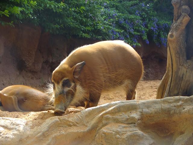 A Trip To The Zoo | Bioparc Fuengirola 2