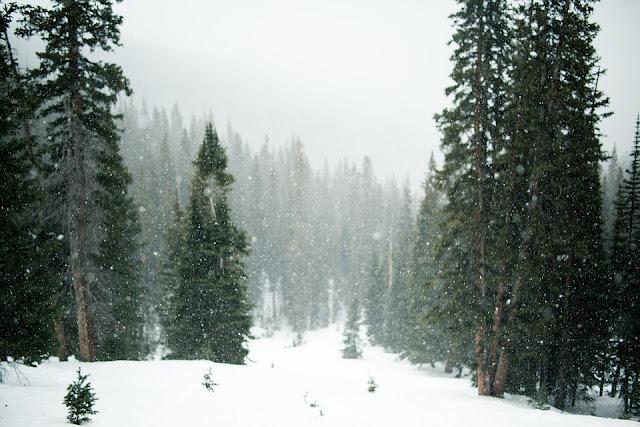 hutan tiaga