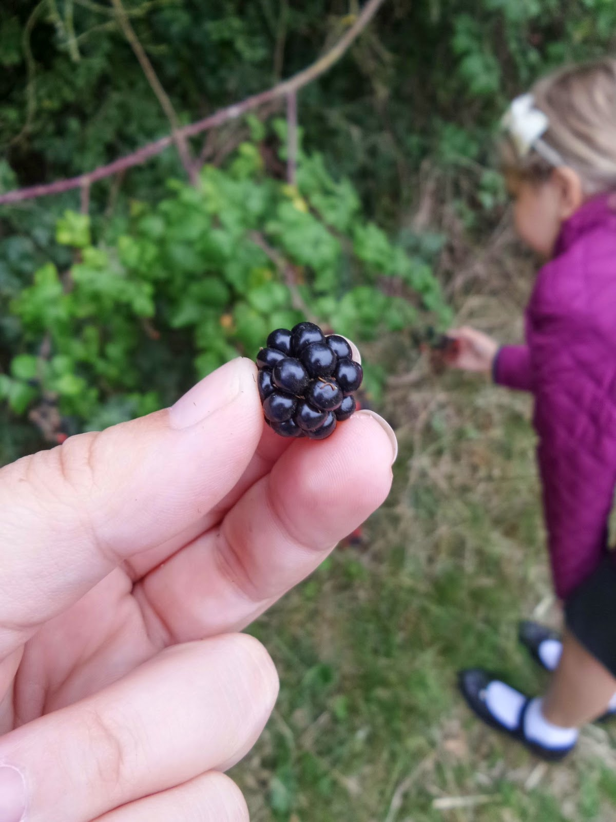 A picked blackberry