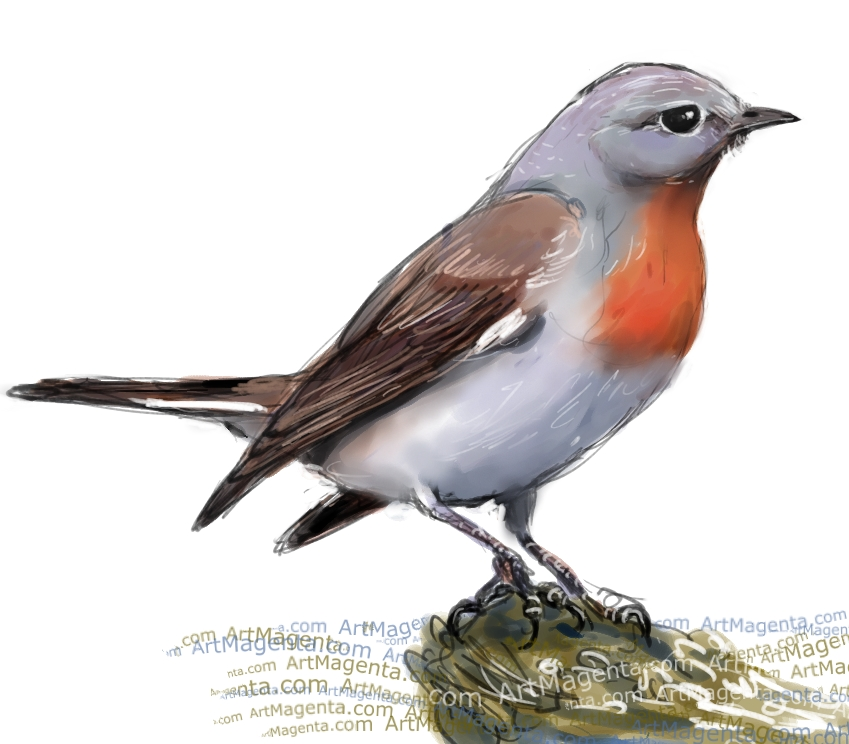 Red-breasted Flycatcher sketch painting. Bird art drawing by illustrator Artmagenta