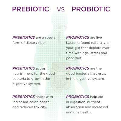 Which Probiotics Are Best For Dogs