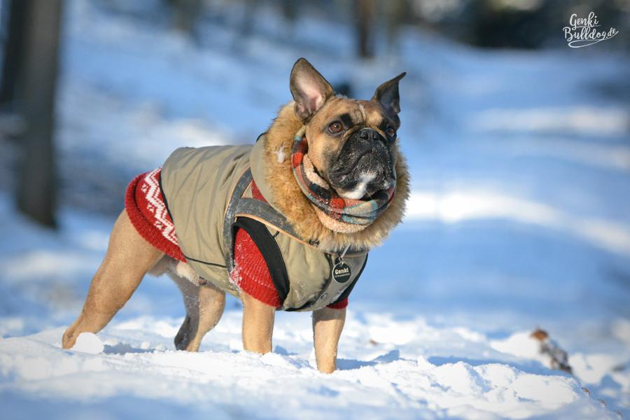 Theo warmer Hundemantel Eskimo für Französische Bulldogge