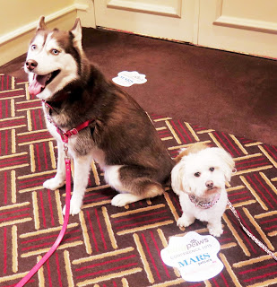 BlogPaws Social Media Conference is pet friendly!