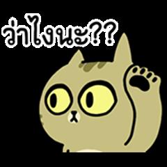 Sinko the Cat: Speakin' Taiwanese