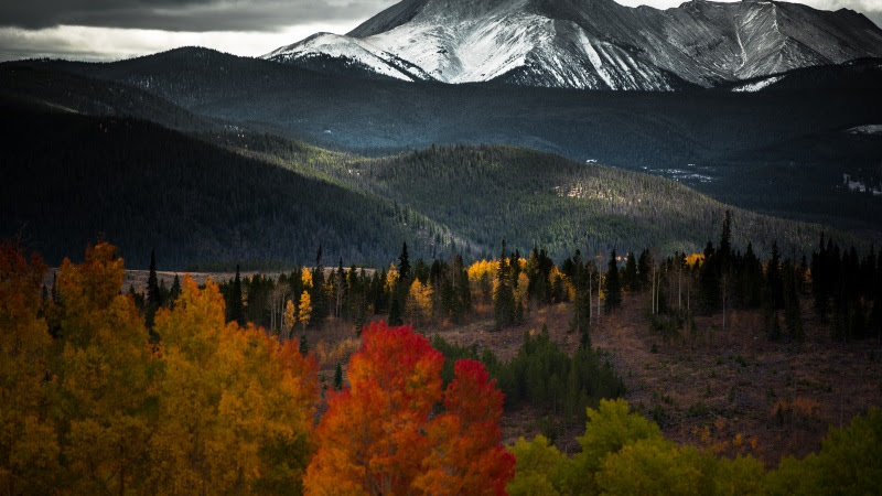 Forest in Autumn. Snow on Mountain 2