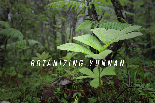 Botanizing Yunnan: Western China and the Tibetan Plateau