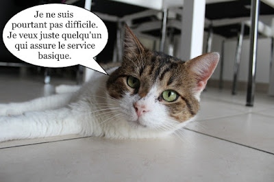 Sammy du Chat Libre de Toulouse