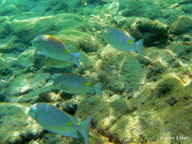 Tioman island, south china sea, tropical waters, scuba diving,