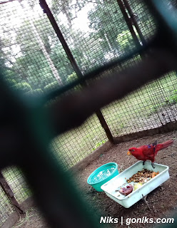 red colour parrot
