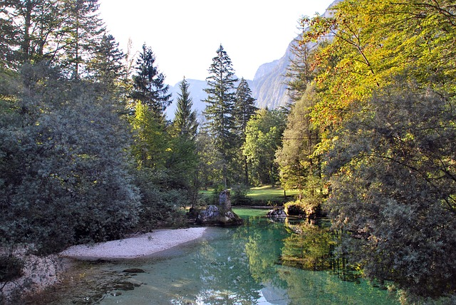Trees, River at  Lake Bohinj Slovenia