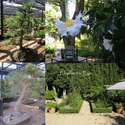 Stellenbosch University Botanical Garden Redwood Cork oak