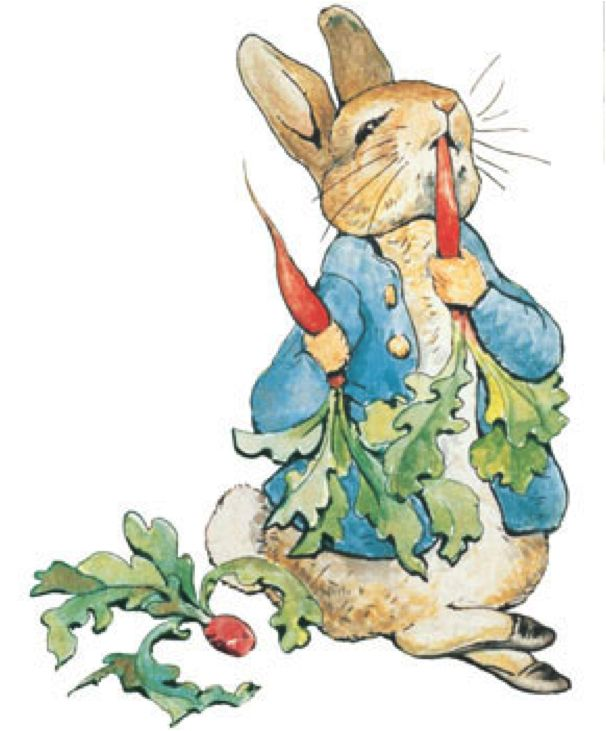 Peter Rabbit eats his carrots