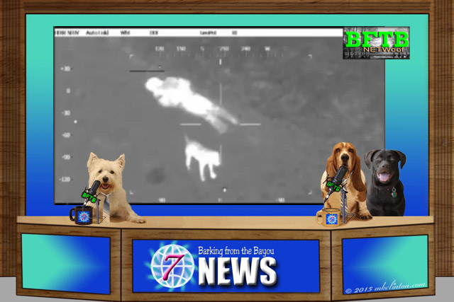 BFTB NETWoof Dog News desk with dog anchors and top story