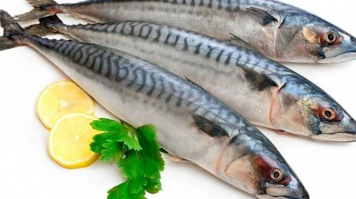 Manfaat Ikan Kembung bagi Kesehatan Tubuh
