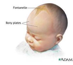 Bahagian Lembut Di Kepala Bayi